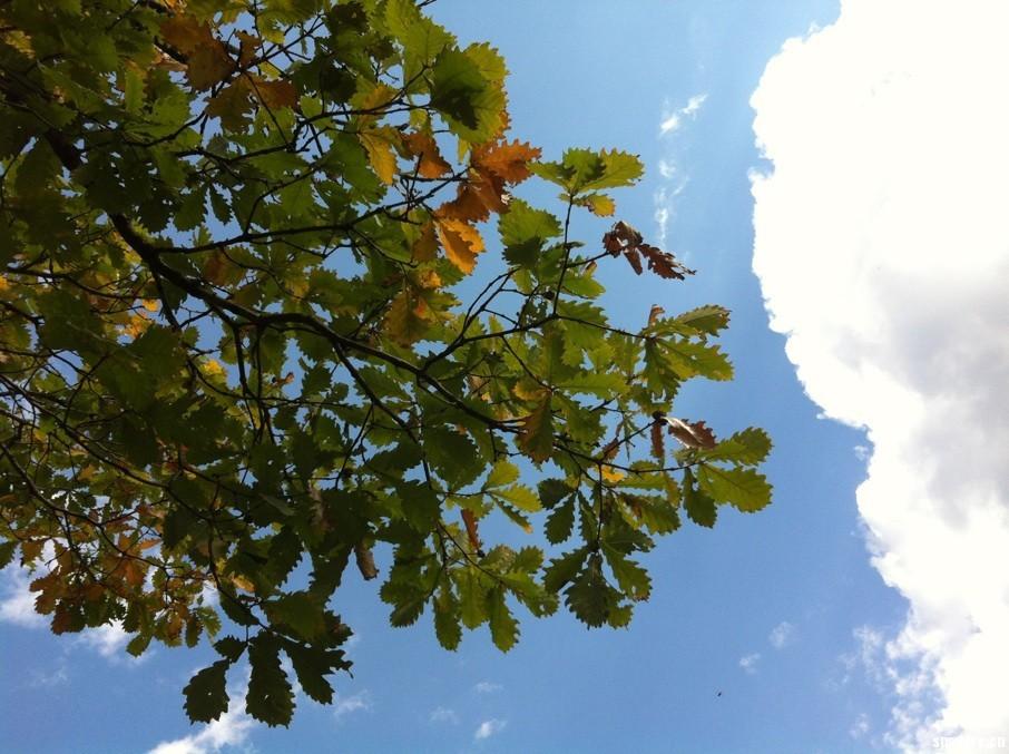 小风景---树叶 蓝天 白云