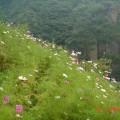 【山百合】2012.8.26 黄安坨-百花山-百草甸穿越 ...