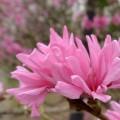 2014-04-10香山植物园