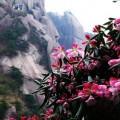 三清山的花草