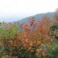 秋游香山寻红叶