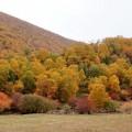 塞罕坝的秋天