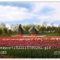 蟒山荷兰风车节