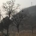 雾霾中的中门寺
