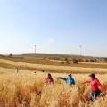 国庆节草原