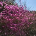 春的丹霞赤壁