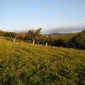 茶山—东甸子梁