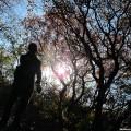 2012.10.27再上香山看红叶
