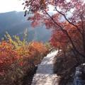 坡峰岭红叶