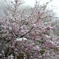 龙门涧偶遇五月飞雪