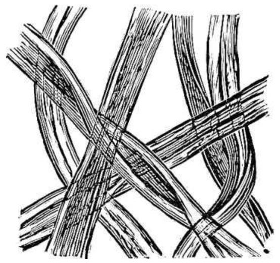 素描动物细胞结构模式图