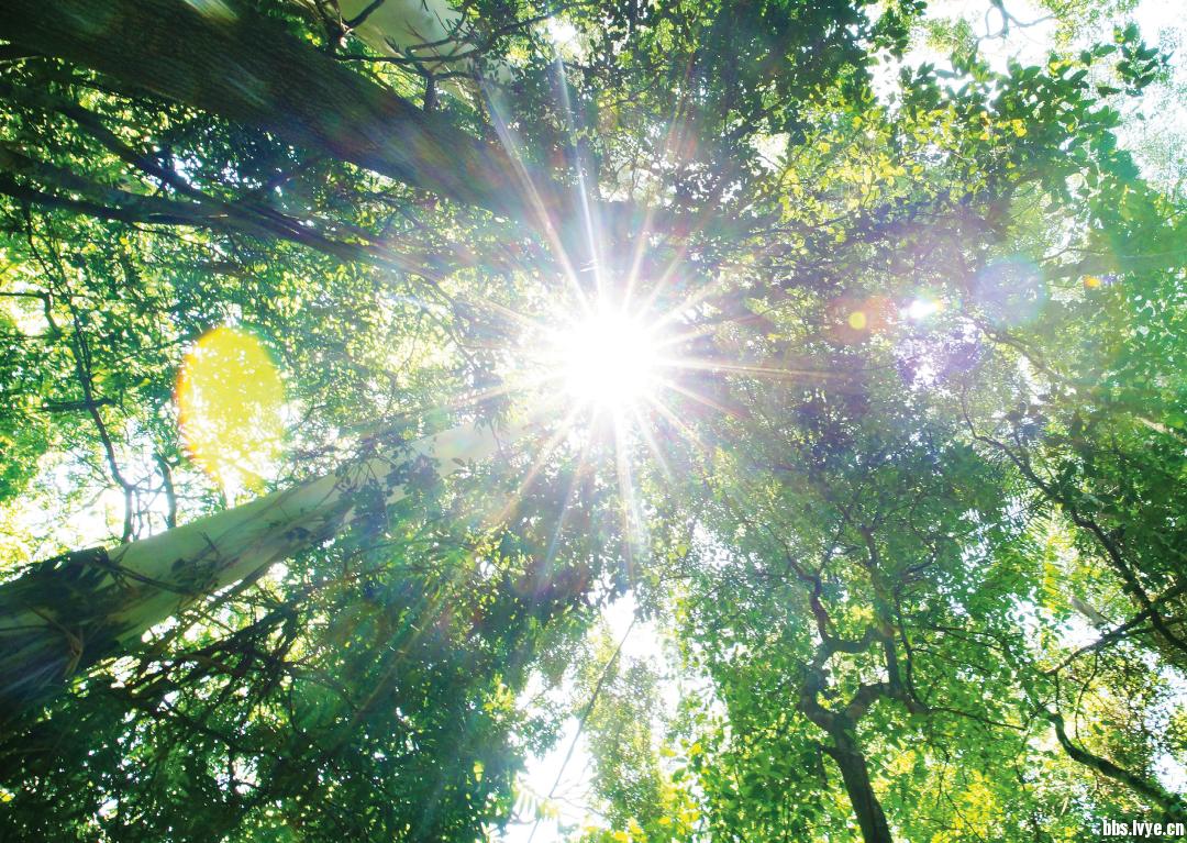 车窗外挺拔葱茏的桉树和树叶间漏下的阳光轨迹都在剧