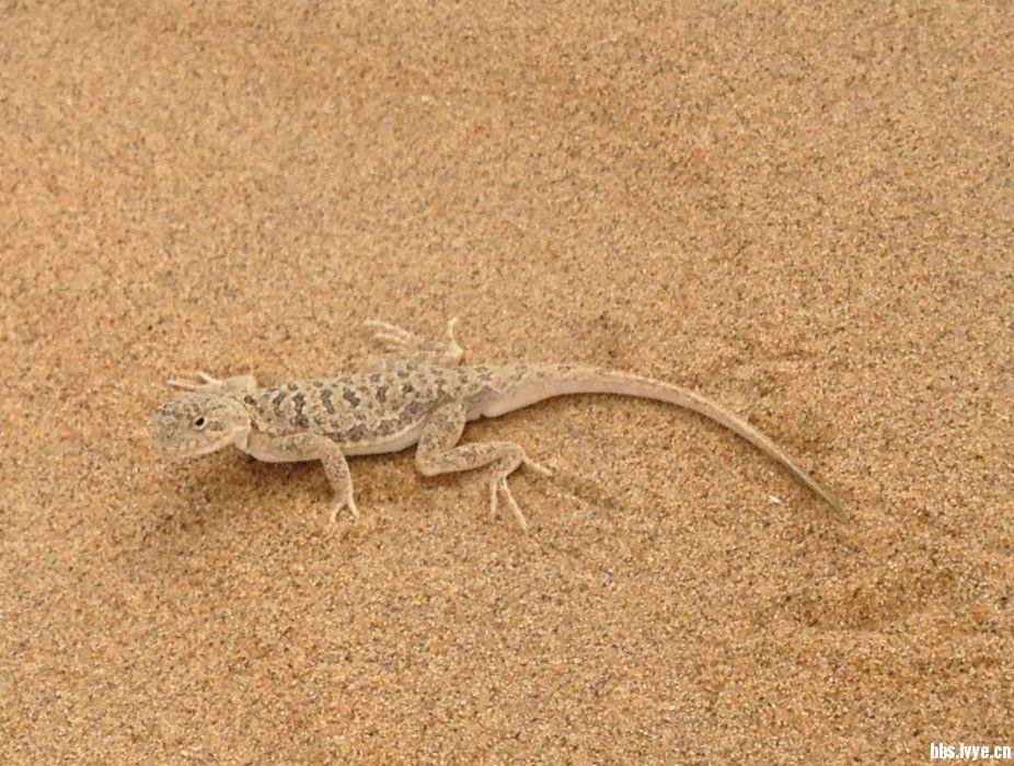 沙漠小动物.jpg