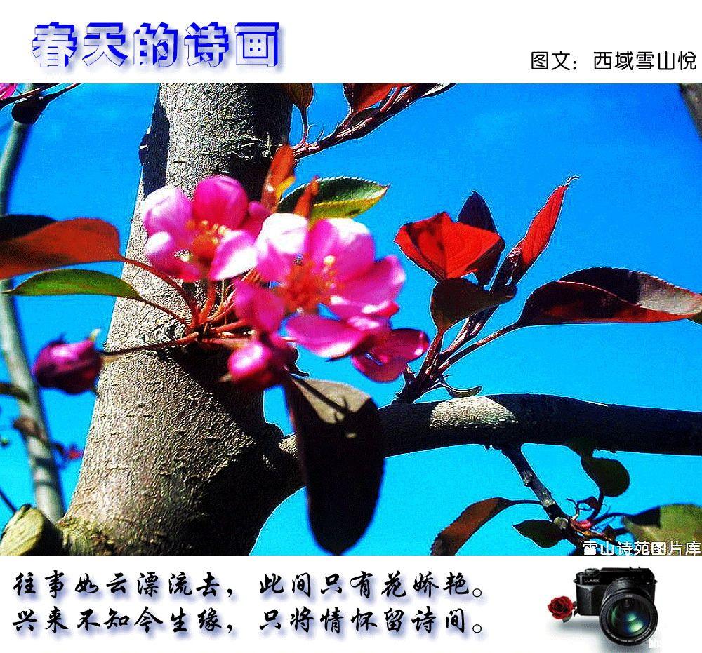 春天的诗画-新疆-绿野各地-绿野户外网
