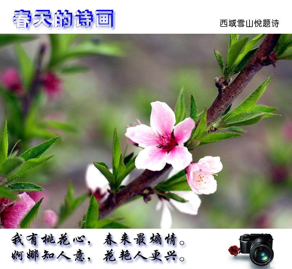 春天的诗韵 (6).jpg