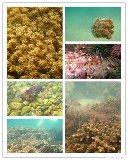 探秘海底世界——香港潜水四大绝佳去处