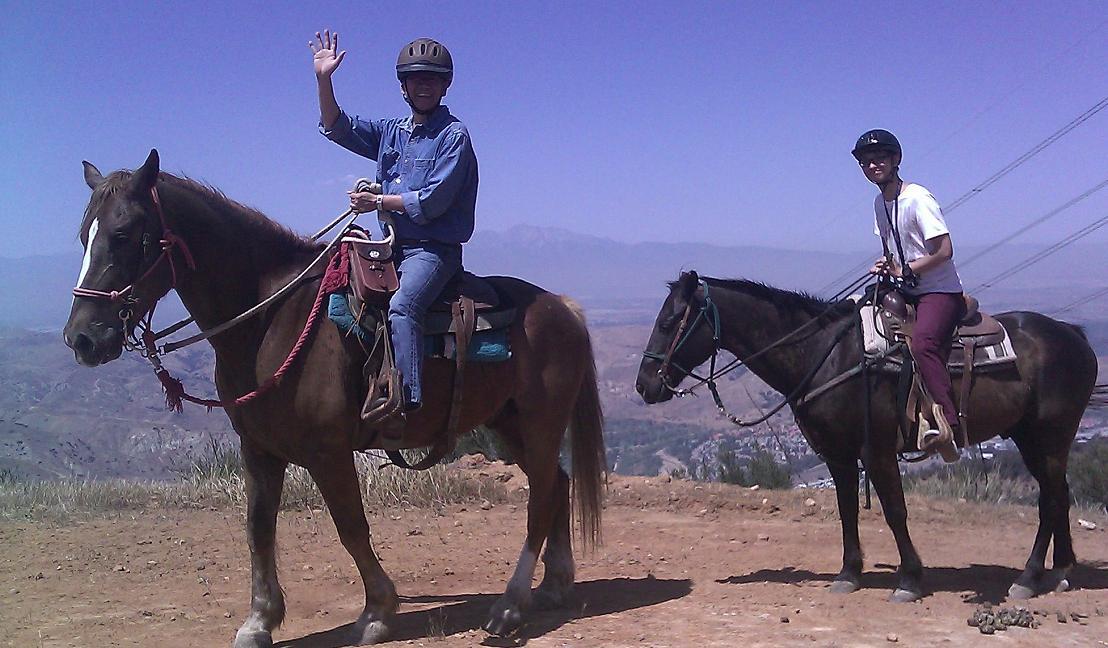 horse ak bb.jpg