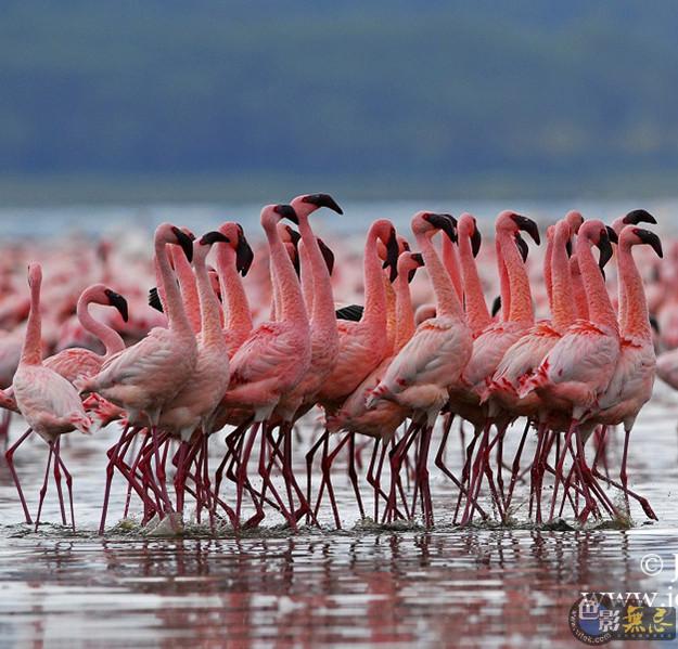 【无忌摄影团】狂野非洲-肯尼亚动物大迁徙摄影之旅