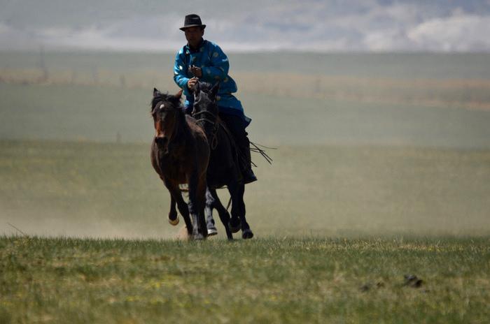 骑马牛仔图片素材
