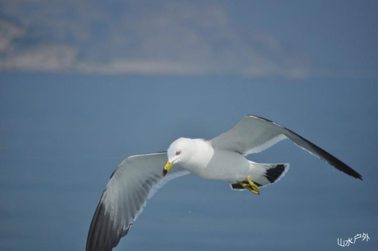 壁纸 动物 鸟 鸟类 750_499