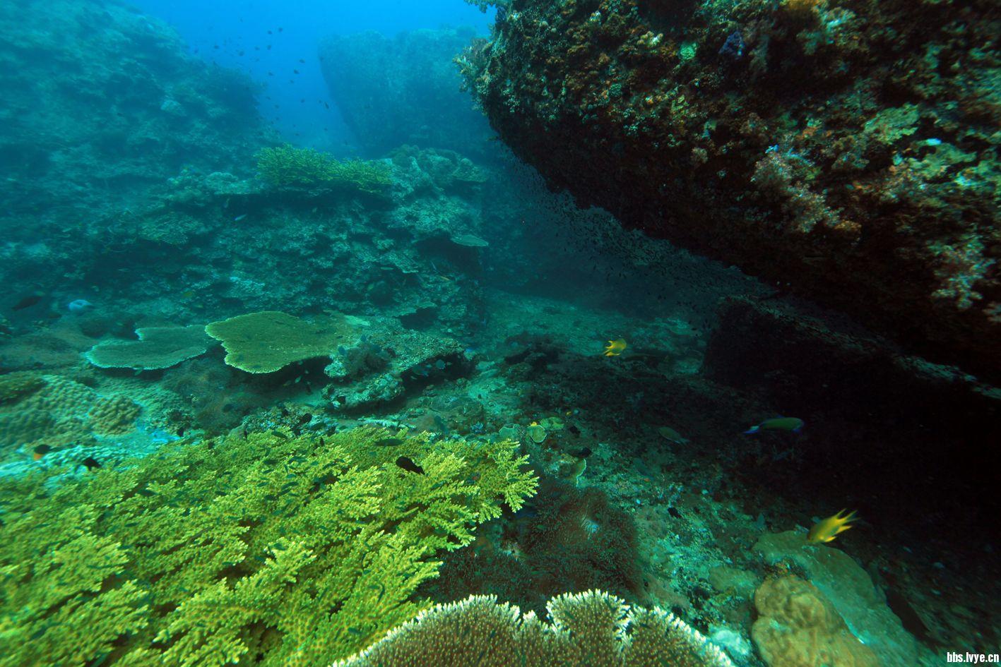 马来西亚 刁曼岛 一图片