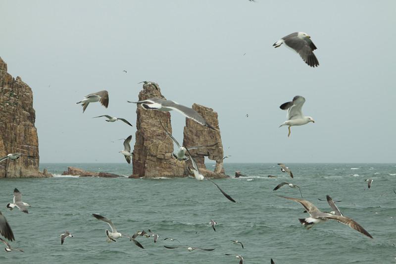 【奔哥户外】端午游蓬莱逛长岛拍海鸥戏海豹照片征集帖