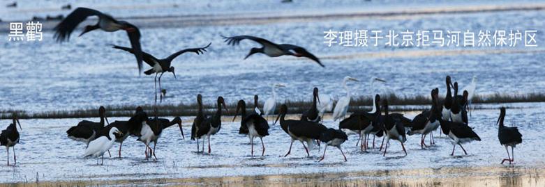 保护站自费制作宣传册以推广保护野生动物的理念,在学校进行环保宣传