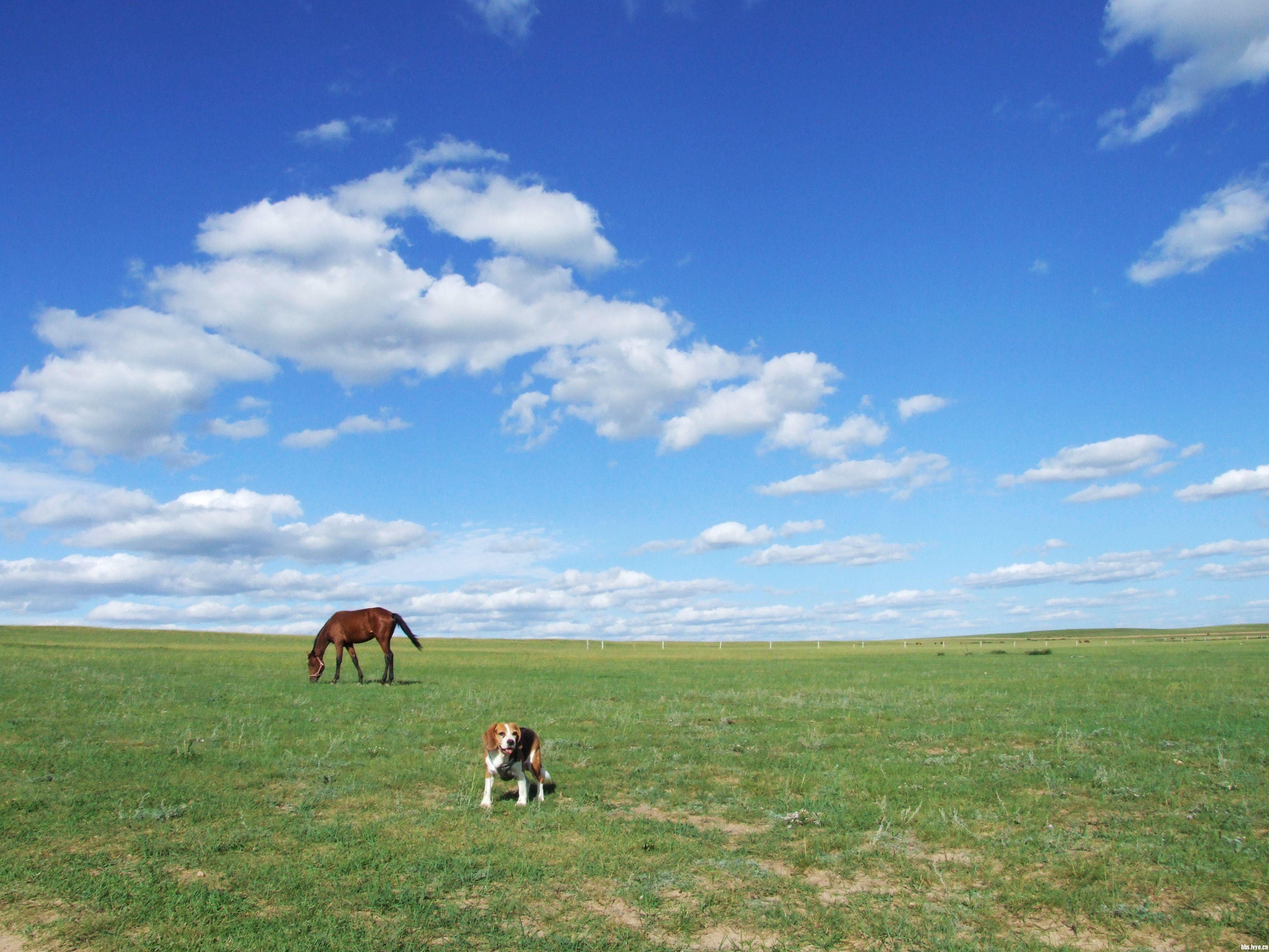 呼伦贝尔大草原唯美自然风景桌面壁纸 风景壁纸 壁