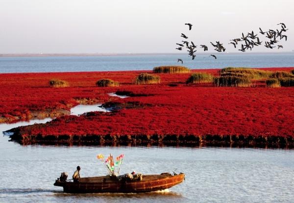 guyu[谷雨]9月6---8盘锦红海滩.亚洲最大的湿地.观丹顶鹤.走神奇天路.