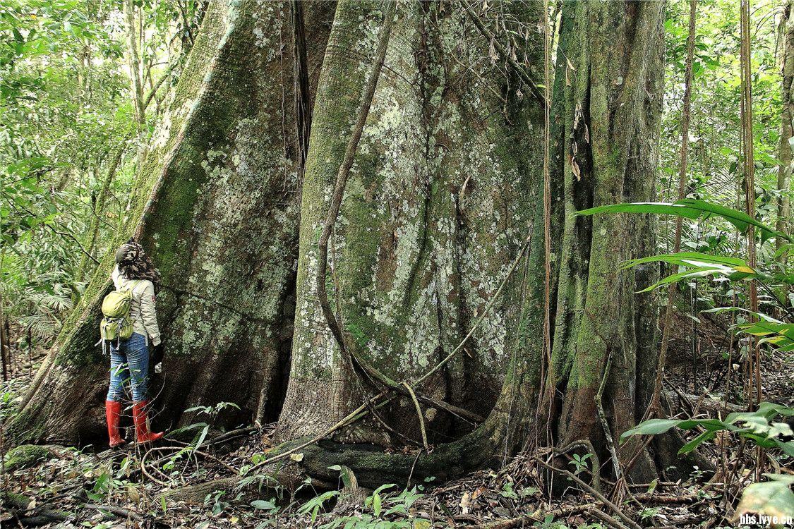 【守望地球】神奇的亚马孙热带雨林~~美国国家地理列