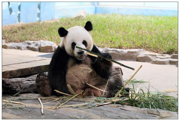 香江野生动物园看动物