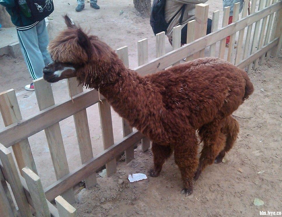 游北京野生动物园