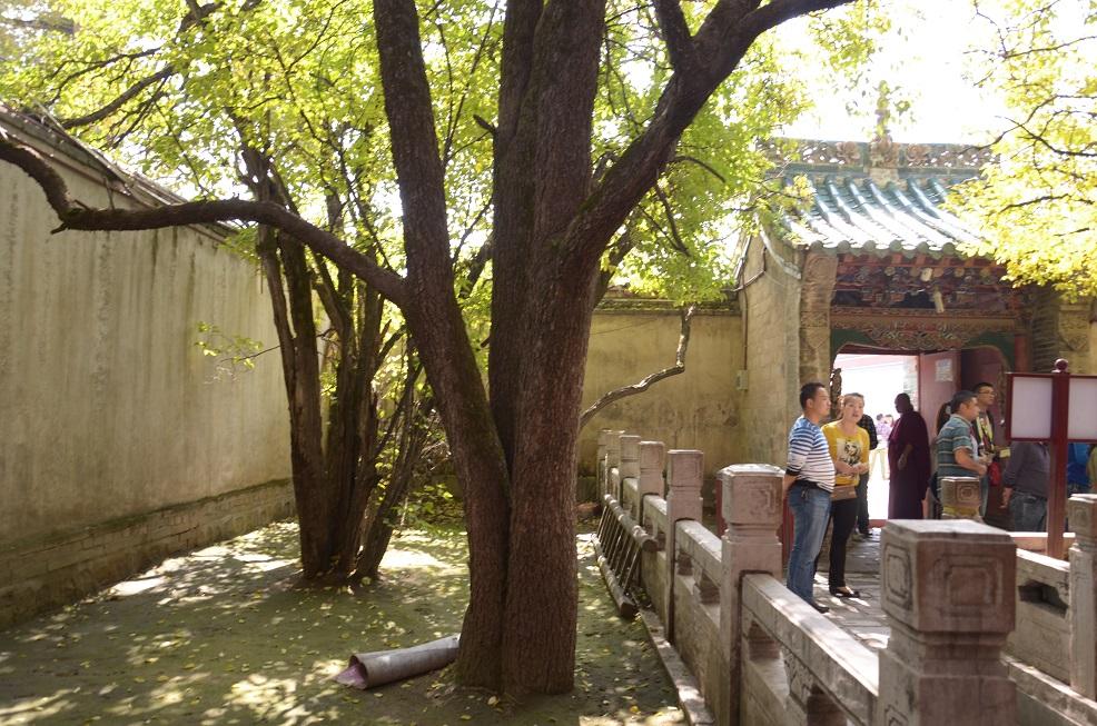 听着导游讲解塔尔寺的菩提树的由来