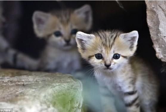 国家二级重点保护动物