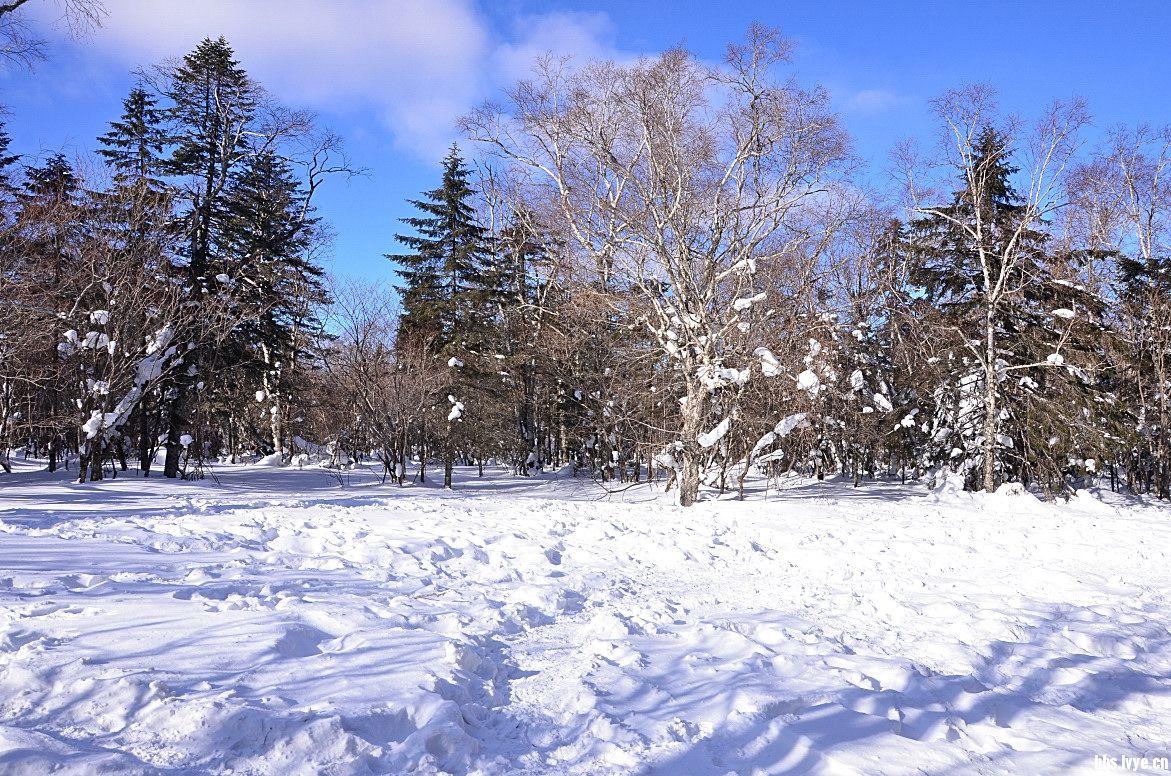 过年了,看看东北的雪景