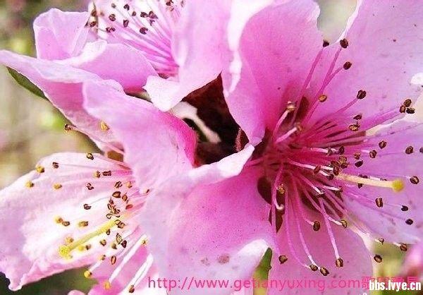 招桃花的微信头像图片