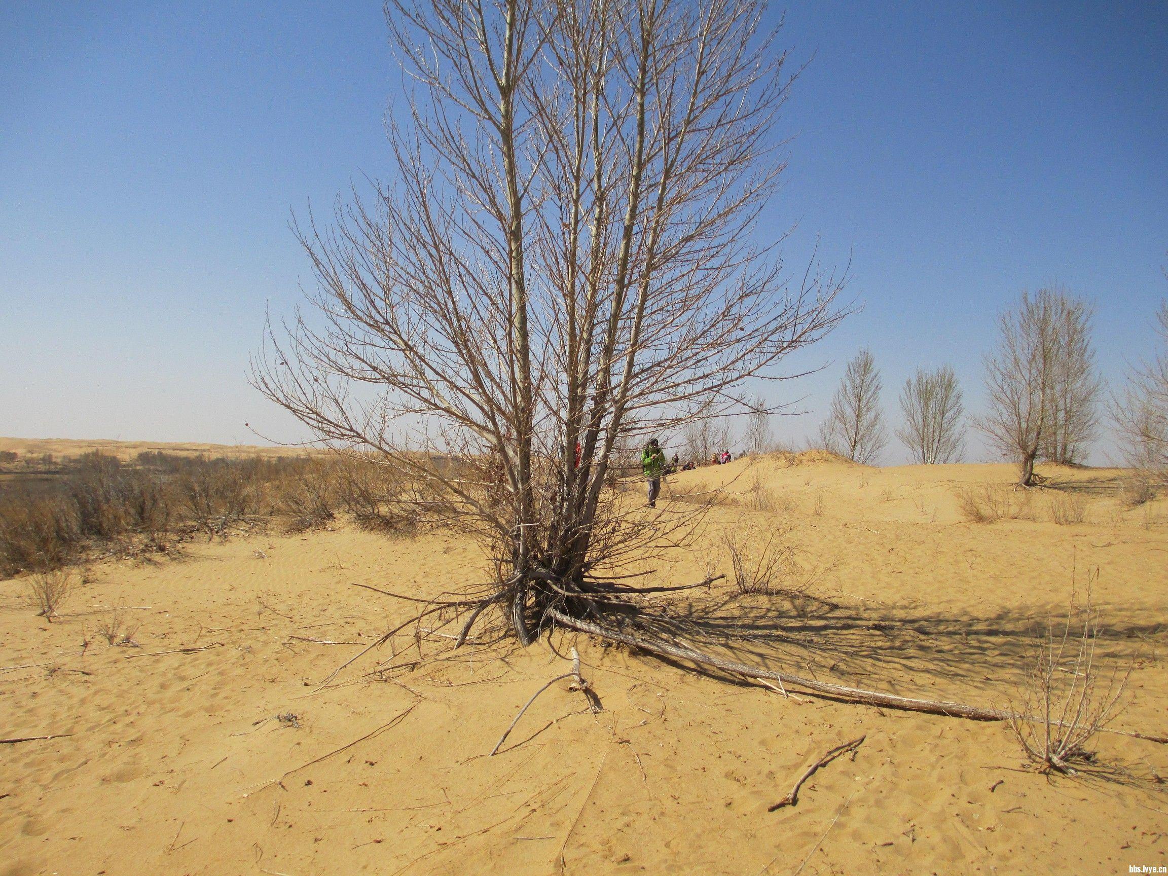 干枯的树木