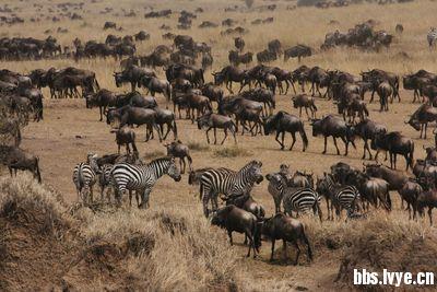 阳行天下旅游 【肯尼亚动物大迁徙】----全国