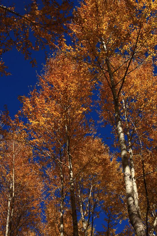 行进间,浓绿的树叶渐变成了绿黄红杂色,映在秋天里非常好看.
