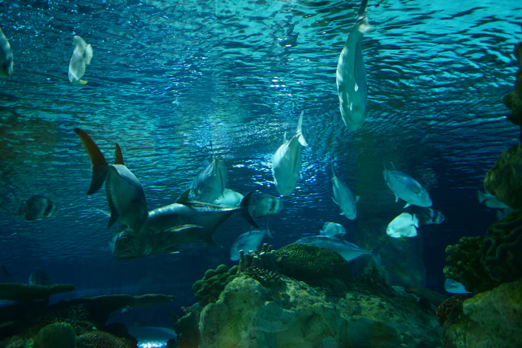 和鲨鱼一起共眠-海底世界奇妙夜-亲子户二代-绿野主版