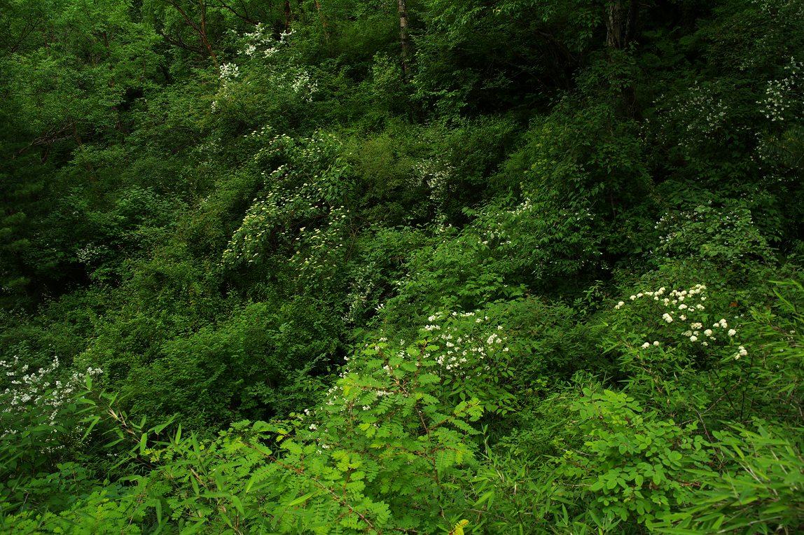 竹林山水荷花风景壁纸分享展示