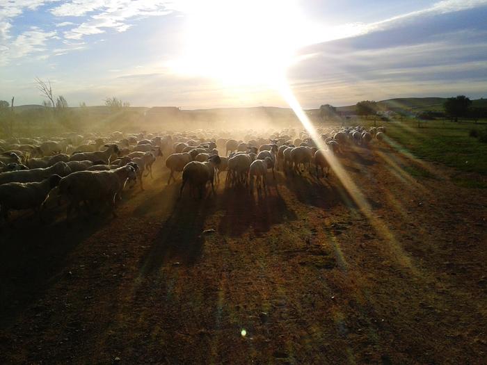 羊群后.jpg