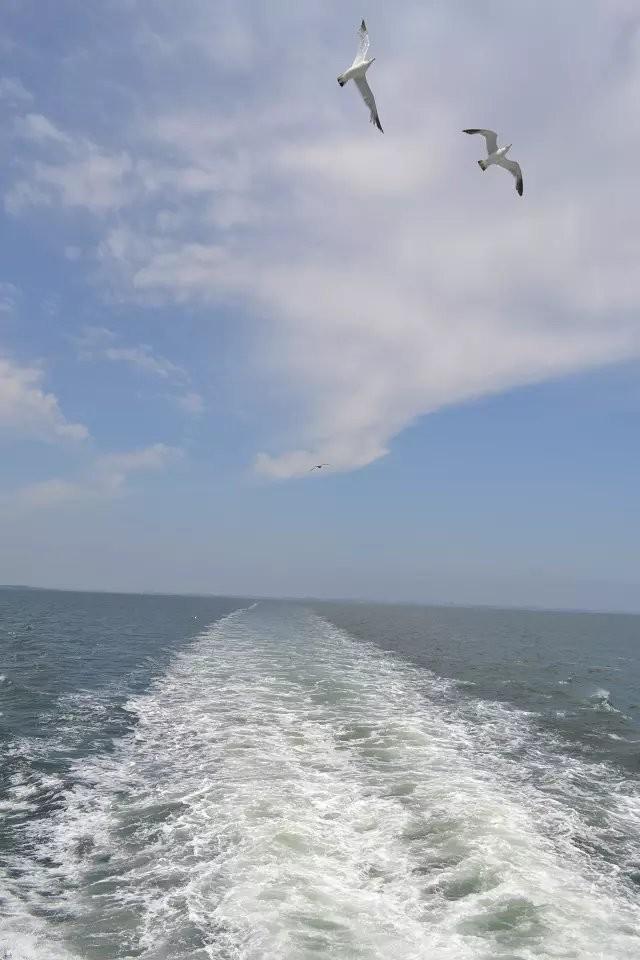 碧海蓝天,海鸥飞翔