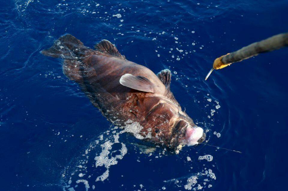 西沙群岛是南海上的一群岛屿,是我国的海防前哨.