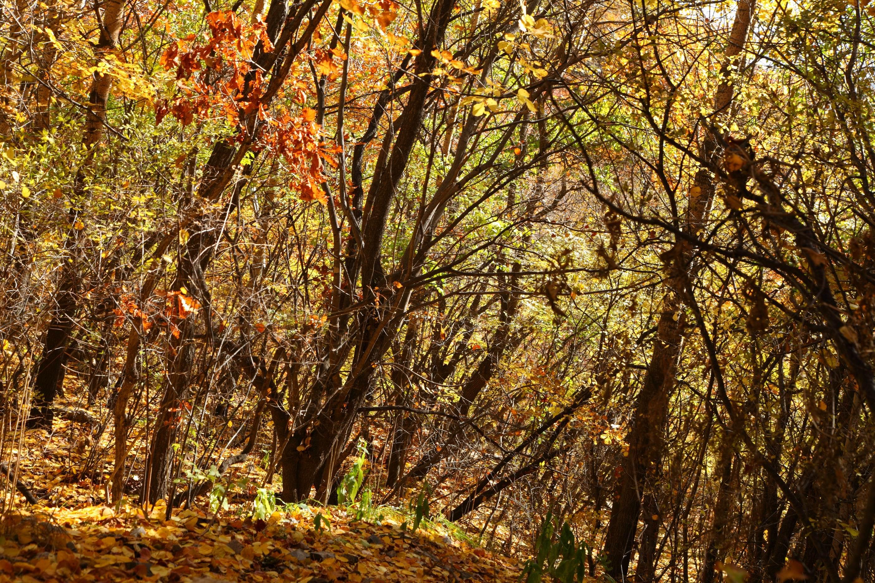 黑白树林风景壁纸