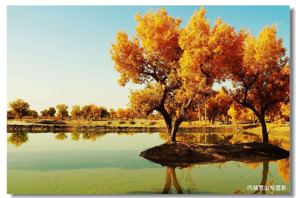 塔里木河水胡杨 新疆 绿野各地