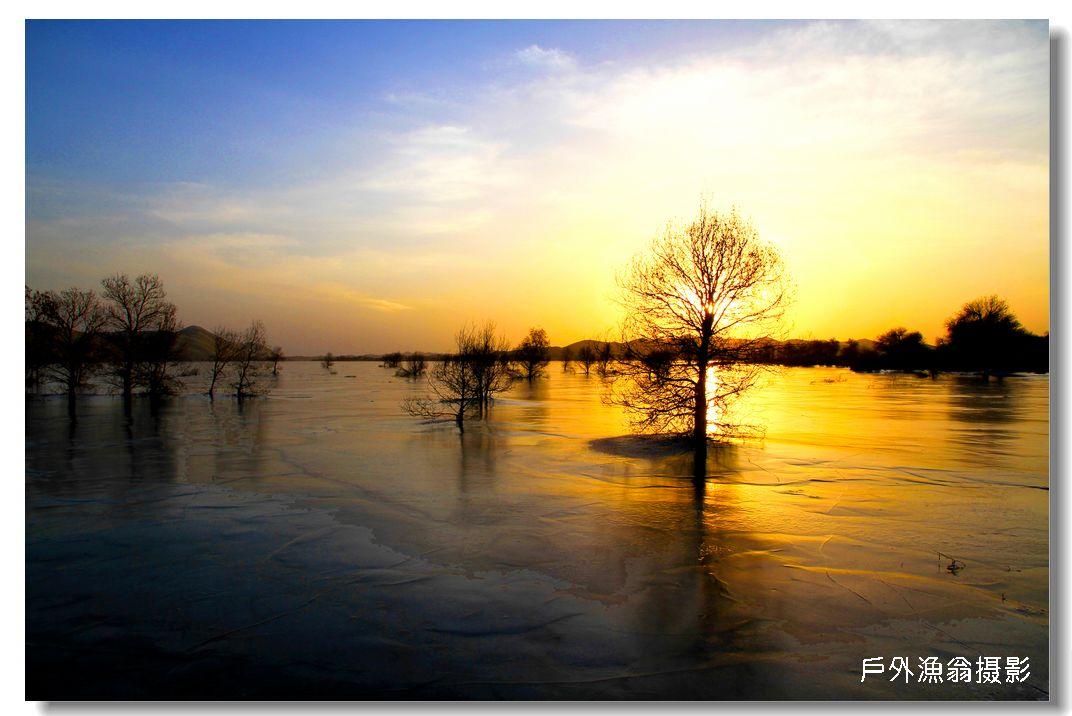 塔河中的冰胡杨晚景