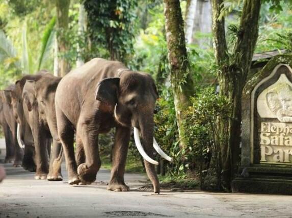 大象野生动物园是到巴厘岛的游客必访之处