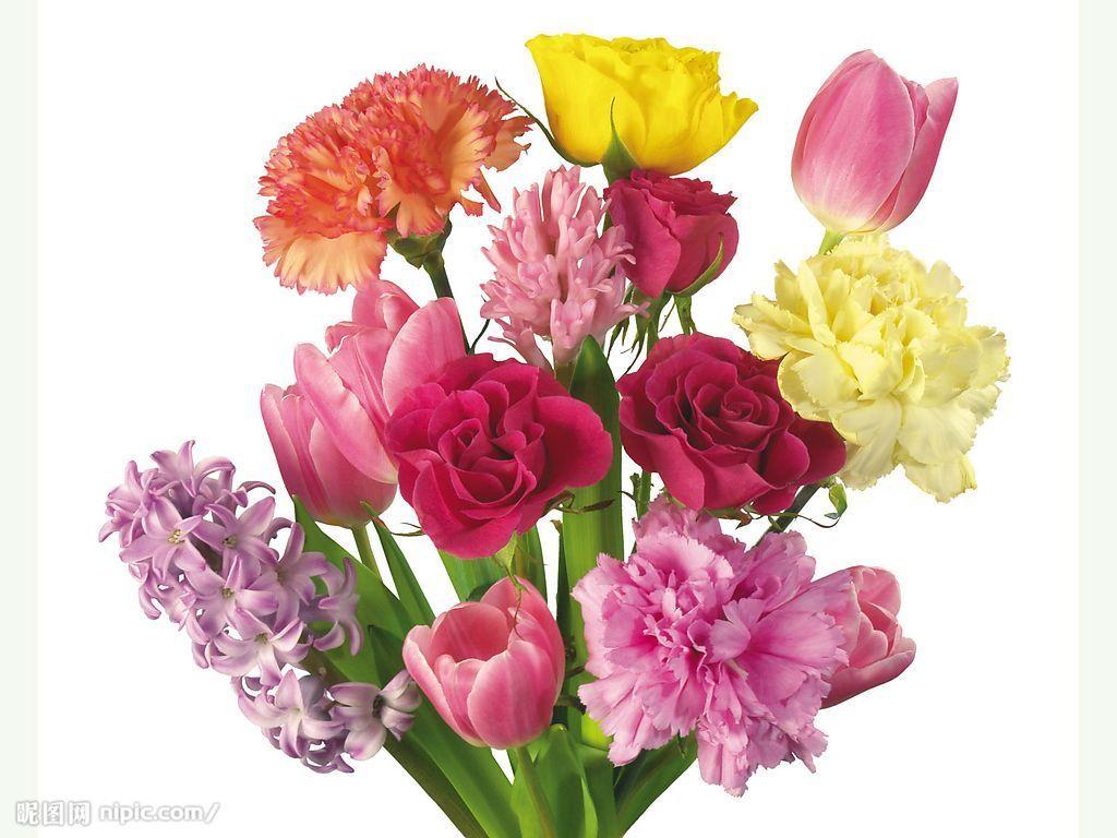 康乃馨花朵简笔手绘