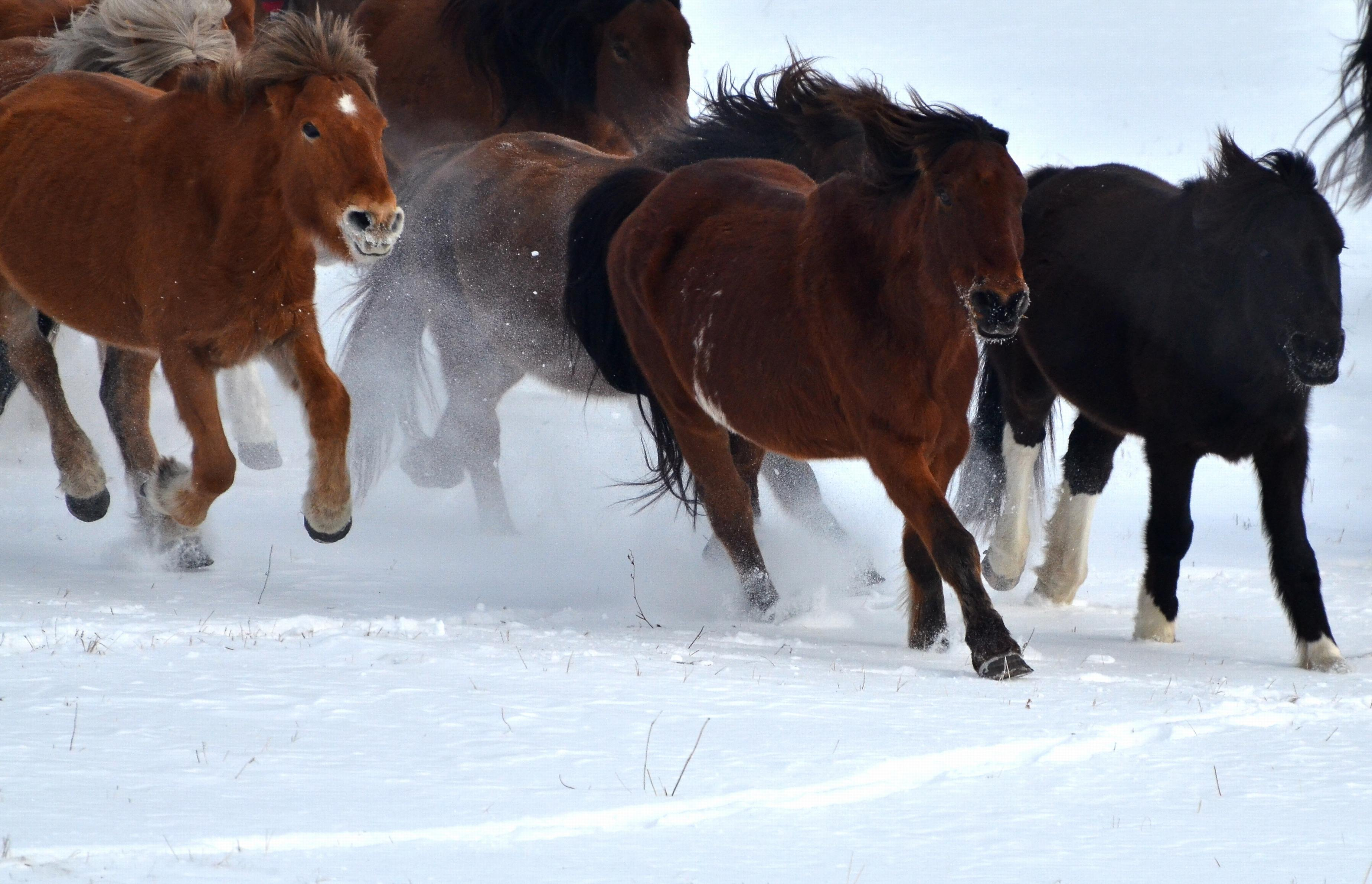 冬天树林骑马图片素材